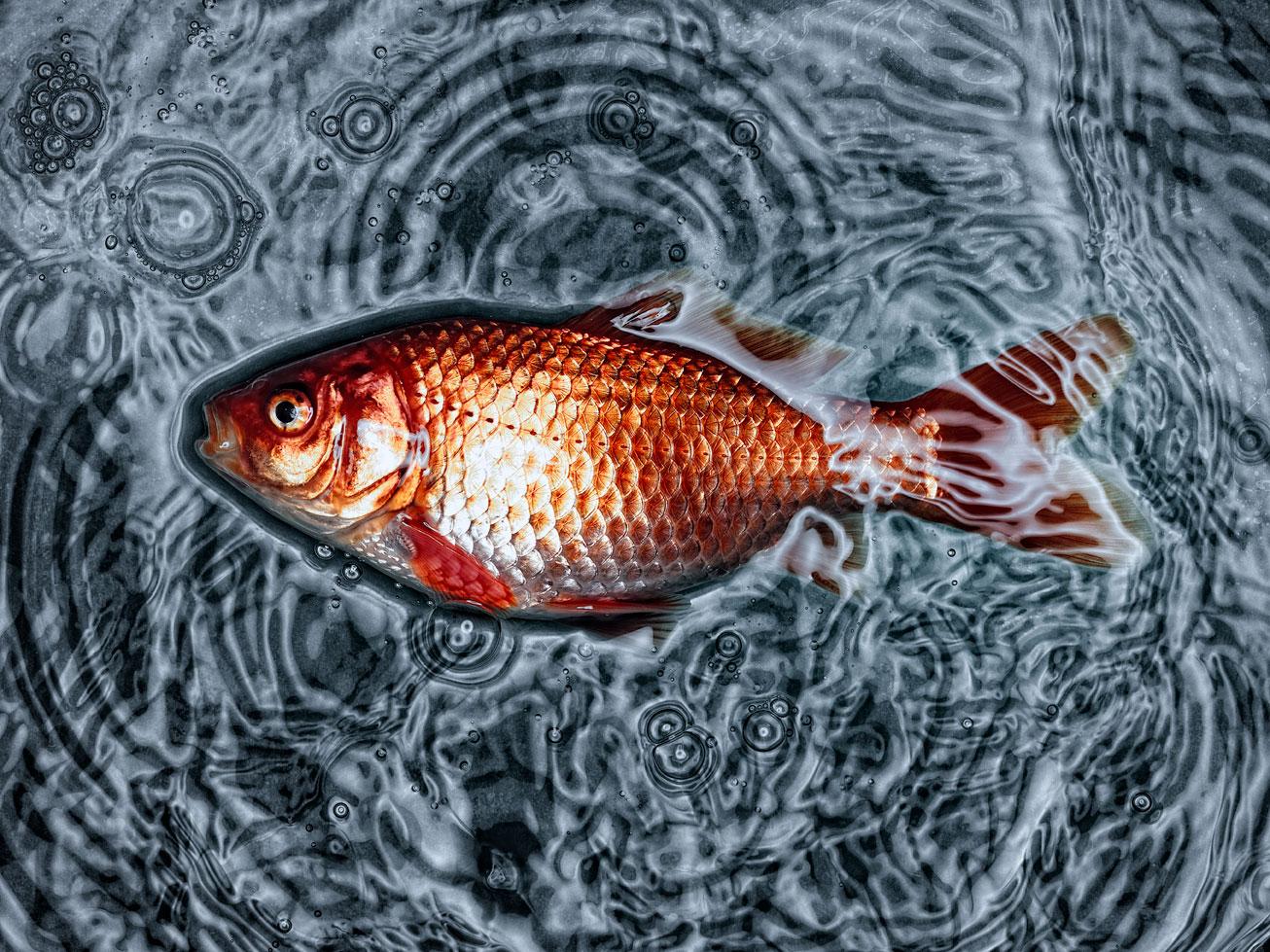 Fisch2-2