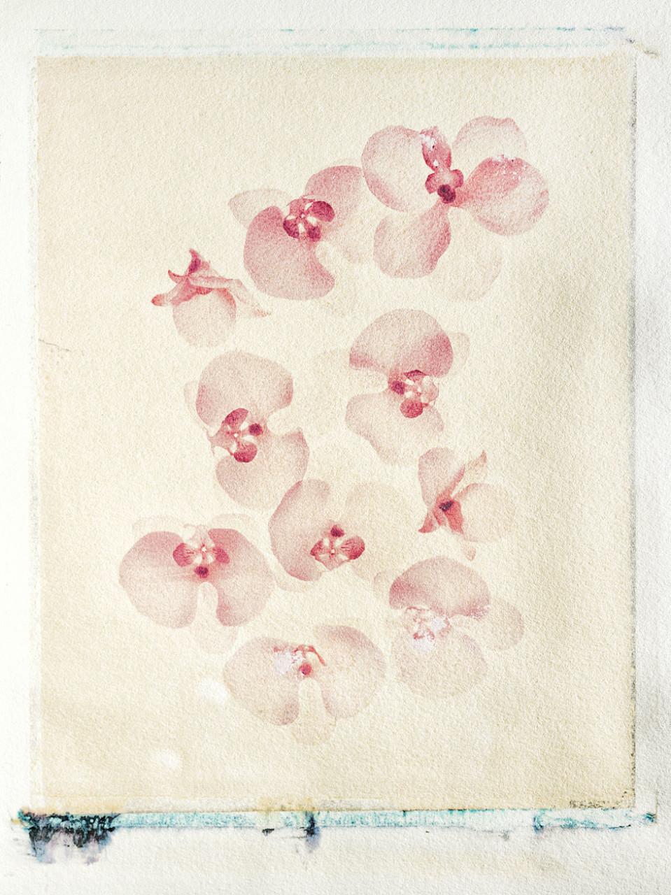 flower26-Kopie